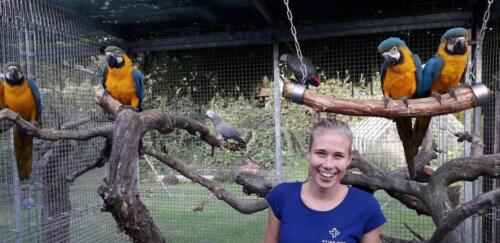 hejno mladat papousku